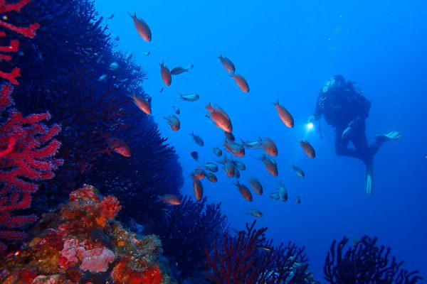 III Jornada Científica de la Càtedra Oceans i Salut Humana: Mar, Salut, Ciència i Societat